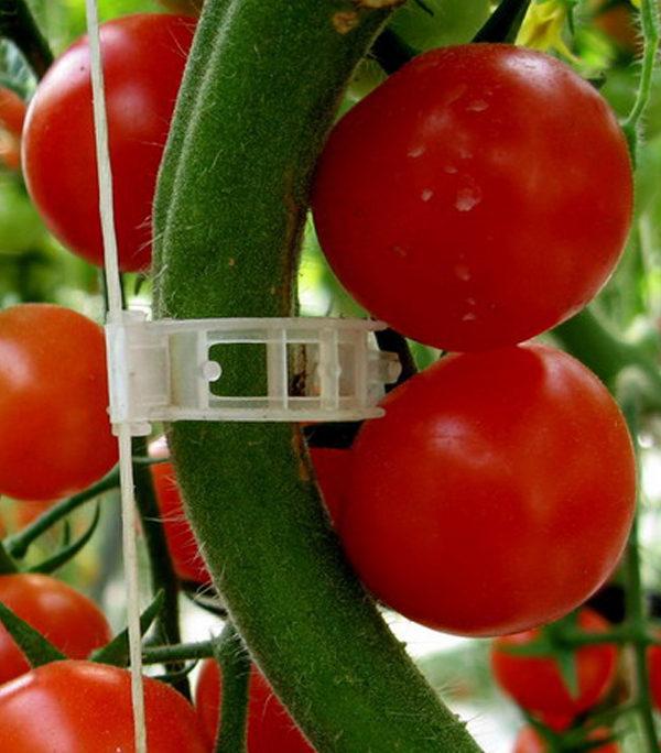Clipsuri tomate