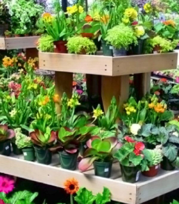 Ingrasaminte pentru flori si plante ornamentale