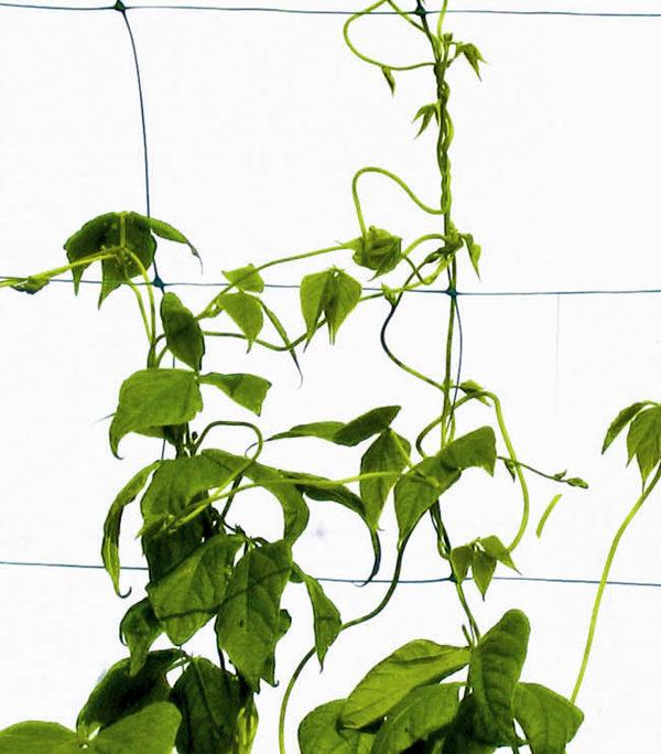 Plasa plante